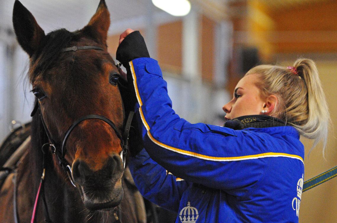 wångenelev tränsar travhäst i stallet