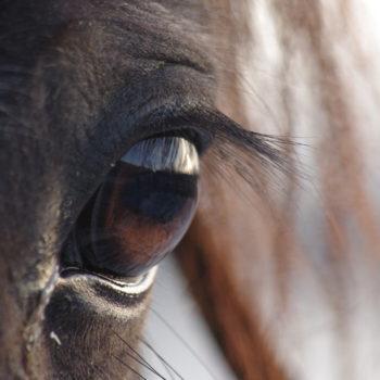 En extrem närbild på ett hästöga får illustrera proffstränarkursen