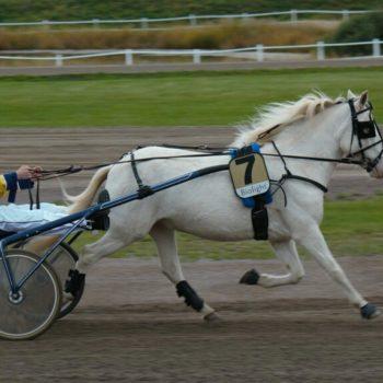 Elev kör Kumlaby Speek i ponnylopp