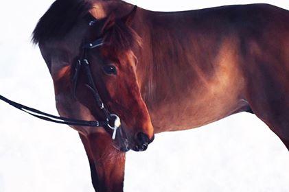 LRF Häst