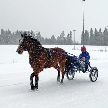 Varmblodstravare för sulky på Wångens travbana i vinterlandskap