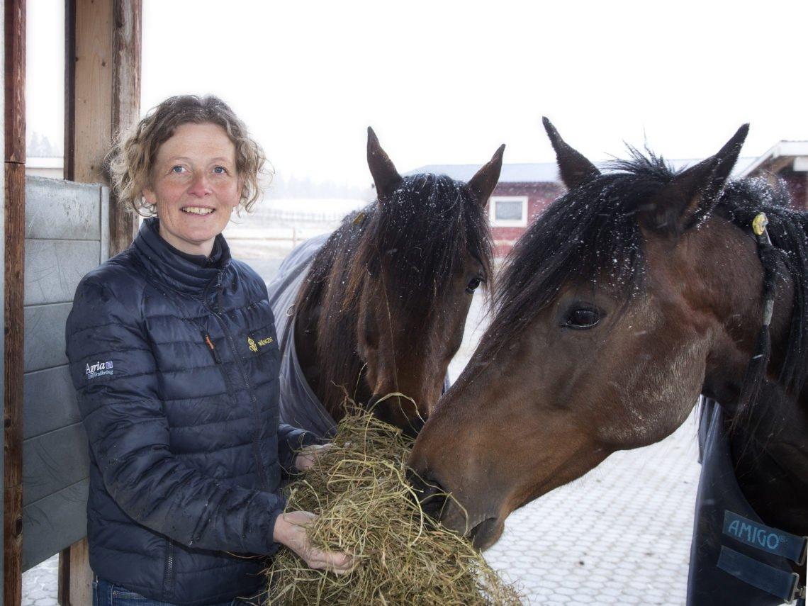 Malin Connysson med två varmblod som äter hö i active stable.