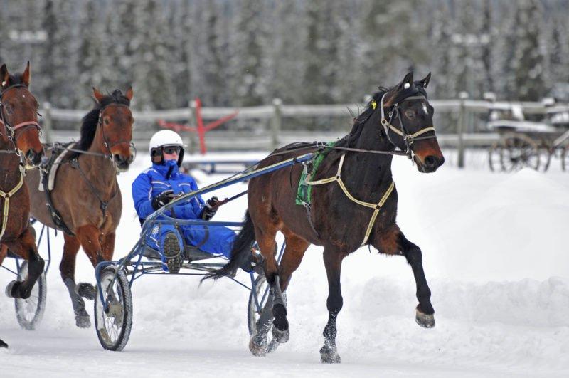 Wången elev kör travhäst på bana i vinterlandskap