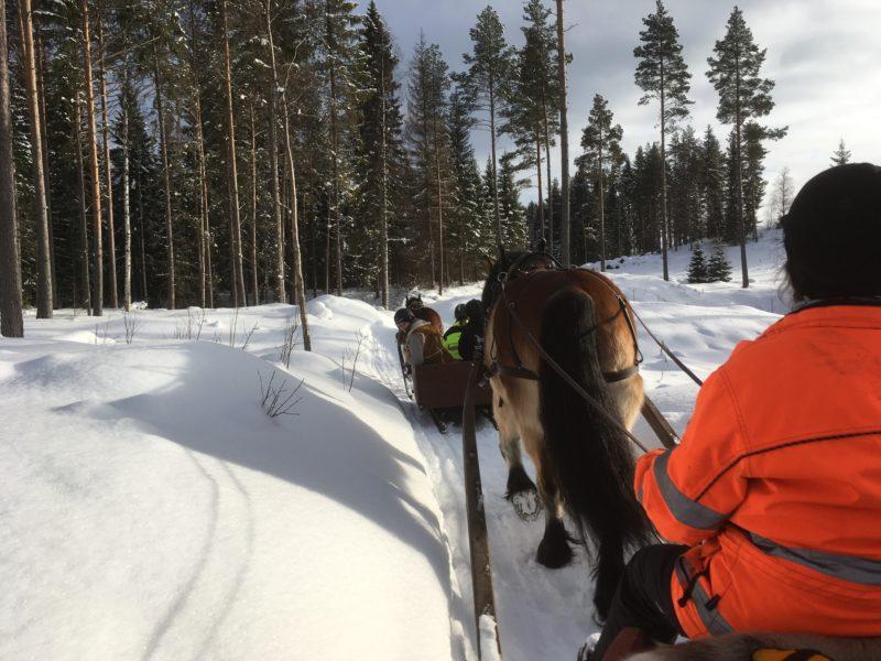 På led genom en smal väg med höga snökanter kör ekipagen genom en gles tallskog.