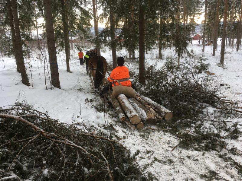 Kusk i orange varseljacka sitter på timmerkälke och kör mellan trädstammarna i snön.