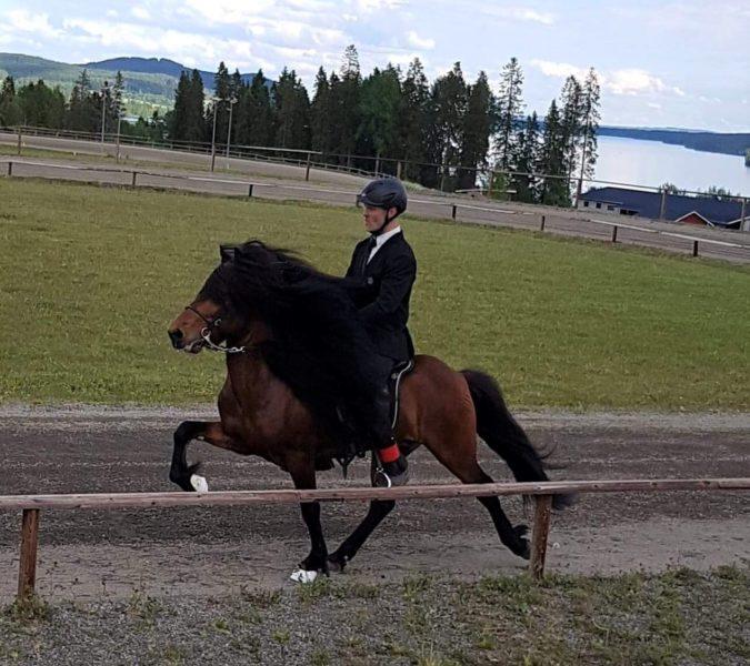 Tävlingsklädd ryttare på ovalbana rider islandshäst i tölt