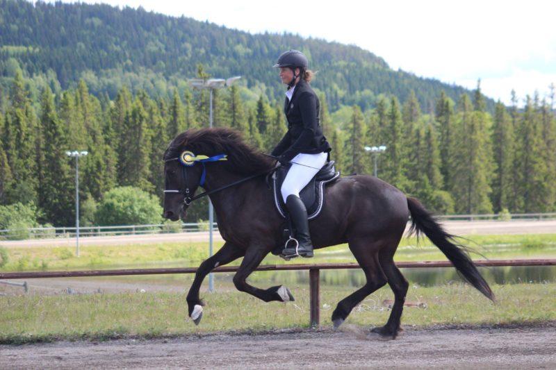 Tävlingsklädd ryttare rider ärevarv på en svart islandshäst med rosett fastsatt i tränset