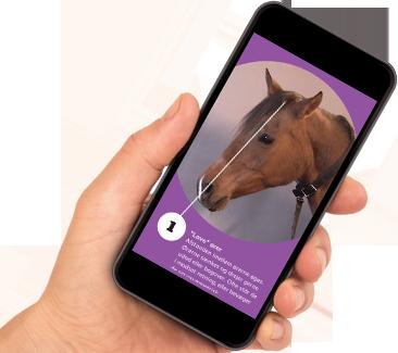 Hand håller i mobiltelefon med en bild på ett hästansikte från appen där man kan testa att känna igen ett painface