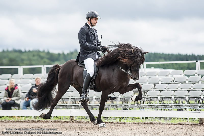 Ryttare med kavaj och vita ridbyxor rider svart häst med högt benlyft vänster fram. Bakom syns två personer på annars tomma läktare.