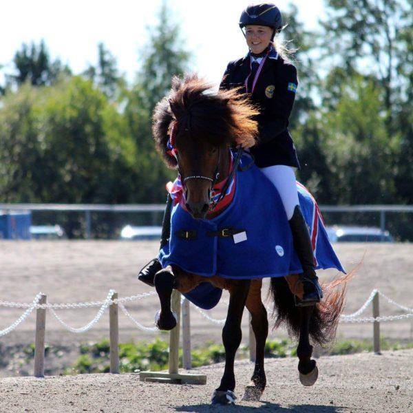 Ryttare i tävlingsdress på brun islandshäst i vinnartäcke