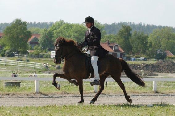Tävlingsryttare på häst med högt benlyft höger fram.