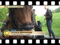 Bild ur nyhetsreportage med texten Ovanlig sophämtare. I bild ett gotlandsruss som drar vagn