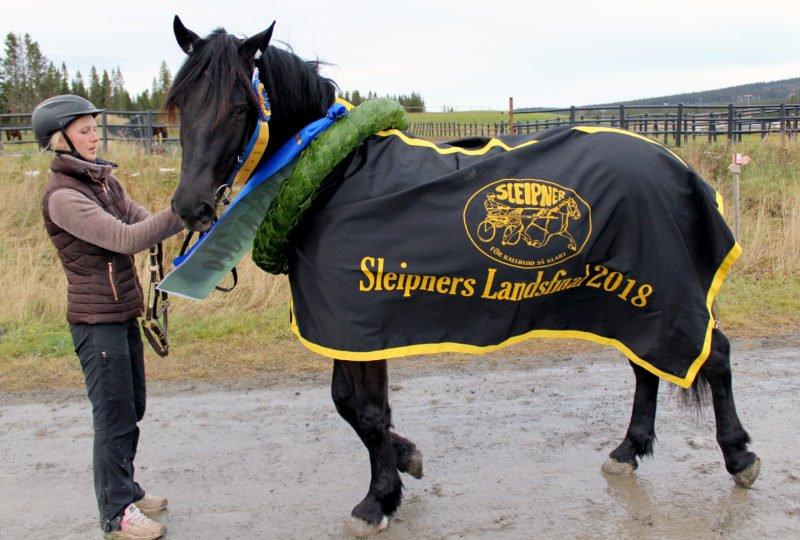 Svart sto med segerkrans runt halsen och täcke med texten Slepiners landsfinal 2018.