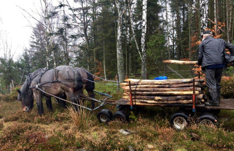 Tvåspann i skogen framför en last med stängselstolp i trä.