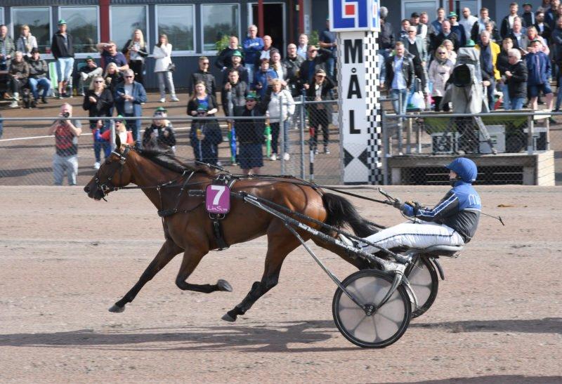 Travekipage passerar ensamma mållinjen i finalen av Wången Cup på Halmstads travbana.