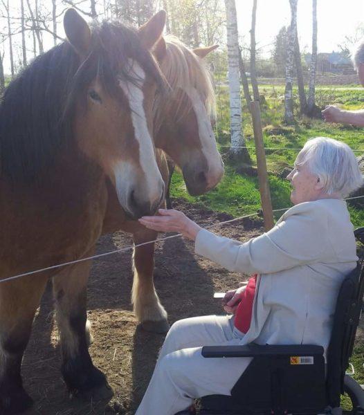 Äldre kvinna i rullstol sträcker fram handen och hälsar på två ardenners i hagen.