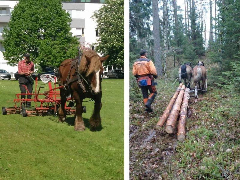 Jäla Häst & Skog på gräsklippningsuppdrag och skogsuppdrag