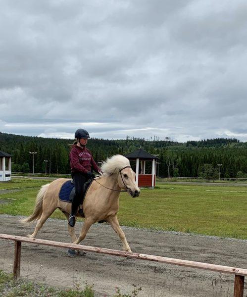 islandshäst på ovalbanan