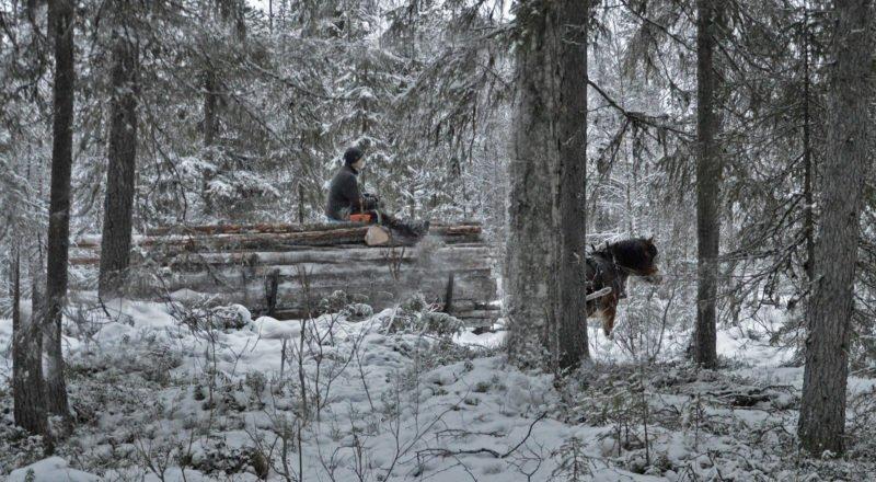 På håll genom skogen ser vi ett timmerlass med en man sittandes på, en nordsvensk häst är förspänd. Marken är täckt med snö