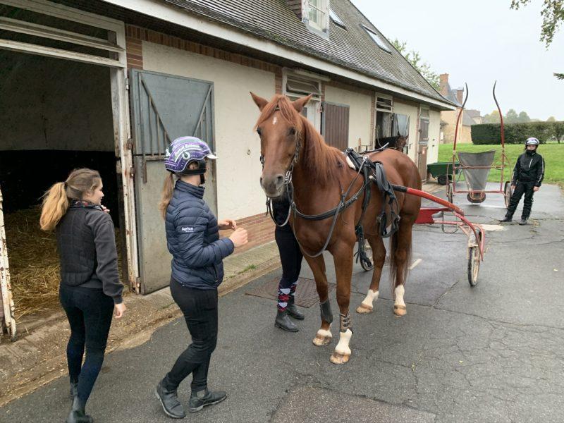 Selad fuxfärgad häst står på asfalten utanför stallet omgiven av hästskötare.