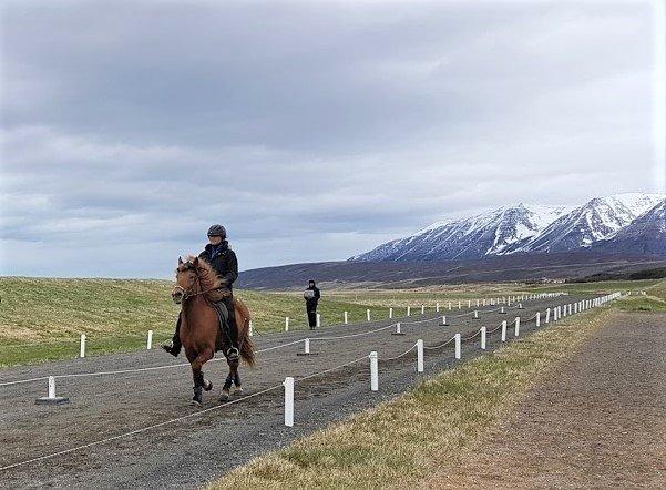 ryttare till häst på rakbana. I bakgrunden syns fjäll med snö