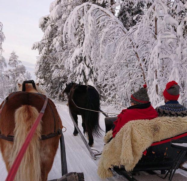 slädtur genom vinterlandskap under snötyngda grenar