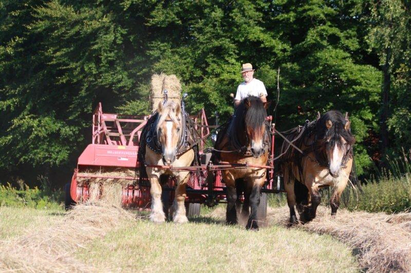 Man kör trespann på åker och drar jordbruksmaskin