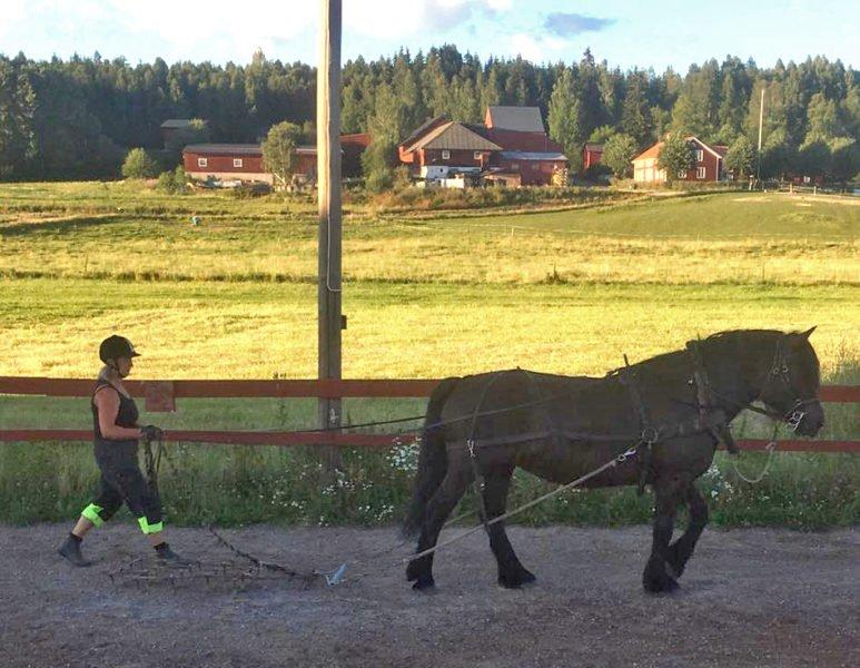 Sommarvy över jordbrukslandskap. I bakgrunden syns en gård, i förgrunden går en kvinna i förd mörka kläder och hjälm bakom en häst med harv på ridbanan