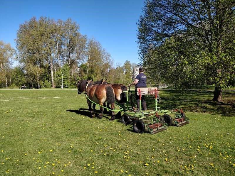 Kvinna kör gräsklippare dragen av tvåspann ardennerhästar