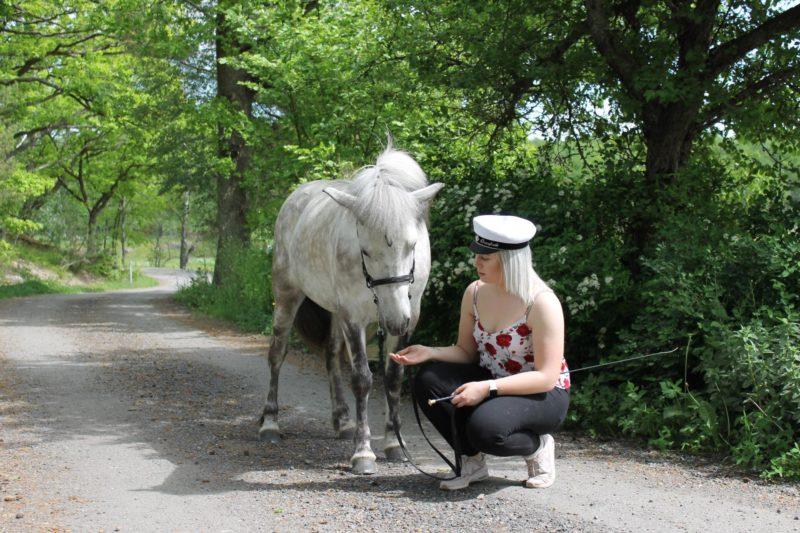 Skimmelfärgad islandshäst på väg i träns. framför hästen på huk sitter en tjej med studentmössa på huvudet