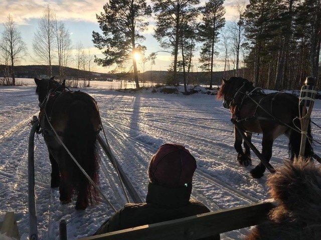 Två slädekipage bredvid varandra tar sig fram i snölandskap. Solen håller på att gå ned och lyser mellan tallarna.