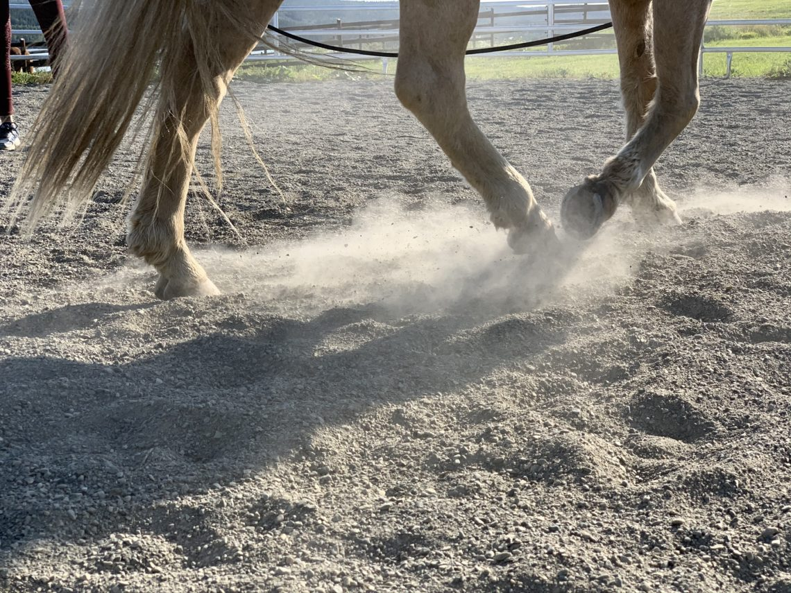 Hästben trampar upp damm i en sandig rundkorall