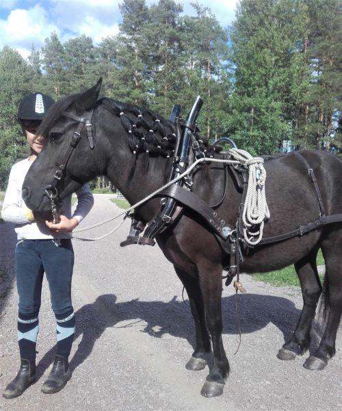 Ett selat svart russ syns från sidan. Vid hästens huvud står ett barn med hjälm och iförd ridbyxor.
