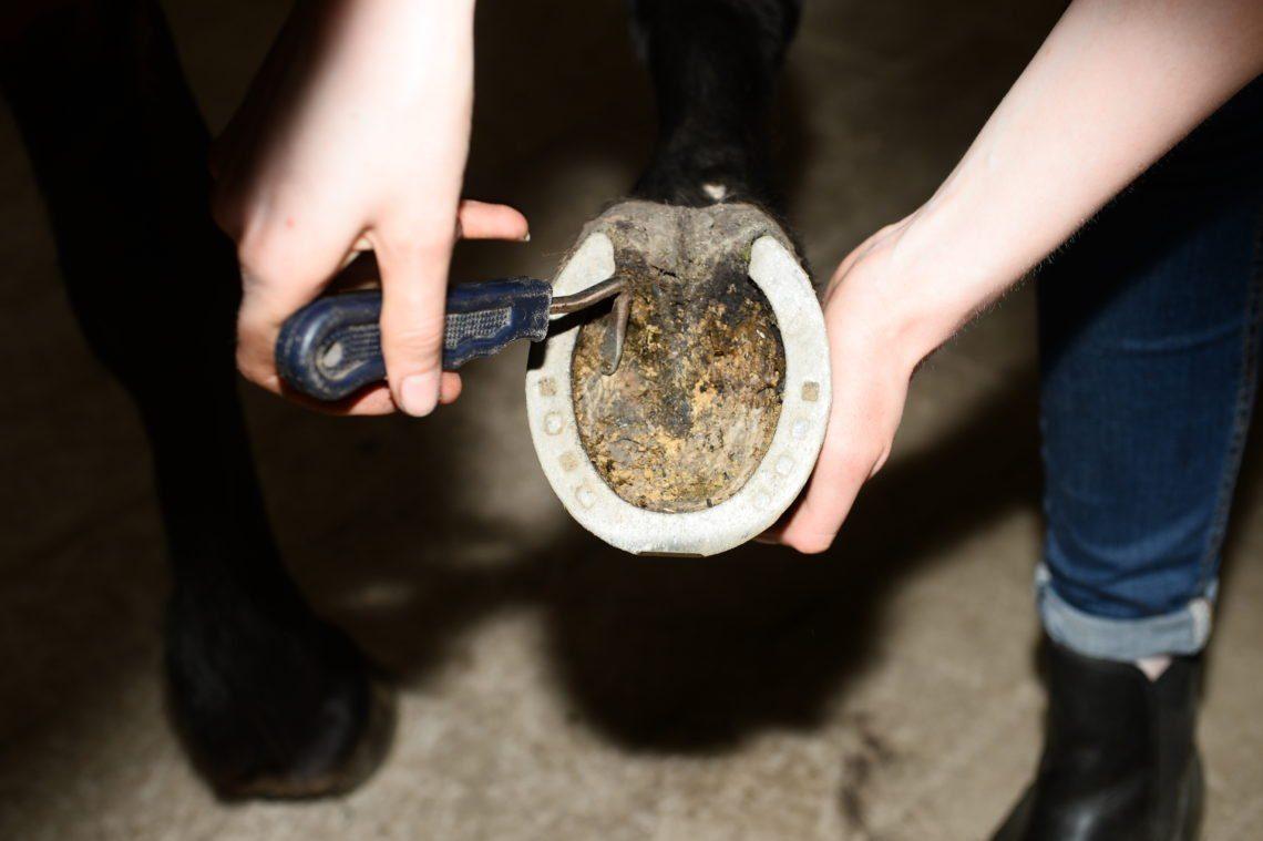 Närbild på två händer - den ena håller upp en skodd hästhov och den andra handen håller i en hovkrats. Förutom grunderna i hovvård får man med kursen kunskap om tappsko