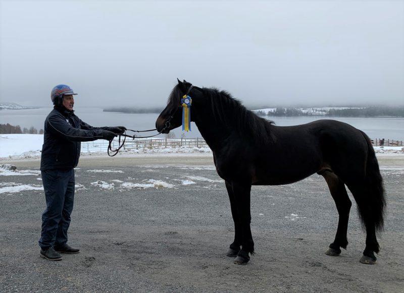 Man står utomhus klädd med hjälm på huvudet. Han står framför en svart häst med prisrosett fastsatt i tränset. I bakgrunden syns ett frostigt landskap.