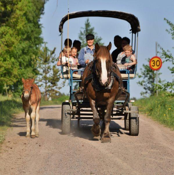 På en väg ser man en häst dra en öppen vagn med personer i. Det är sommar och ett föl går bredvid draghästen.