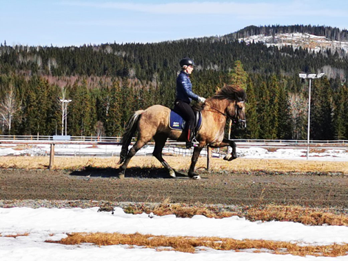 Kvinna rider häst i tölt på ovalbana