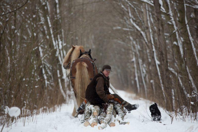 Man sitter på en timmersläde genom skog med lite snö på marken. Bredvid springer en hund