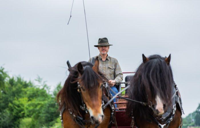 Ett par nordsvenska brukshästar sedda framifrån. På kuskbocken sitter en man i rutig skjorta och hatt. Körspöt pekar rakt upp.