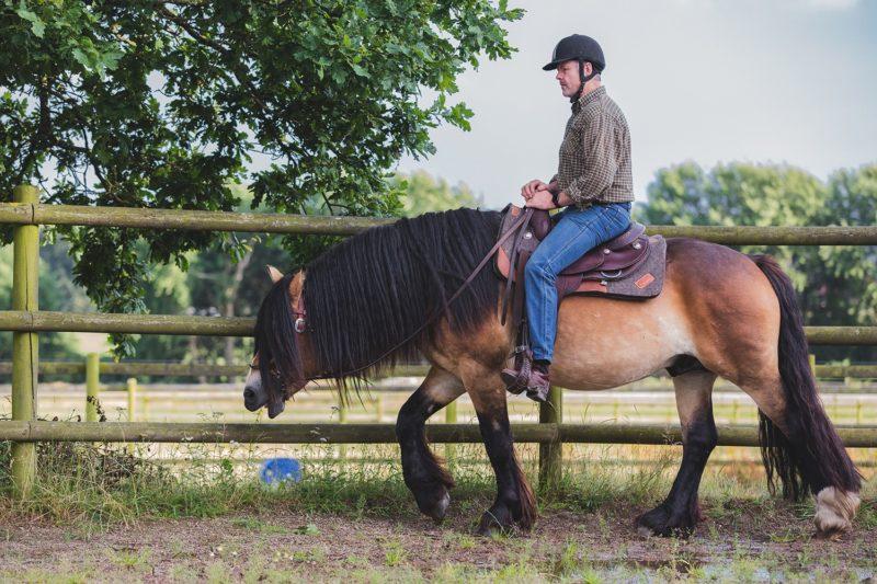 Man i jeans, rutig skjorta och ridhjälm sitter i westernsadel och rider en nordsvensk brukshäst i en paddock