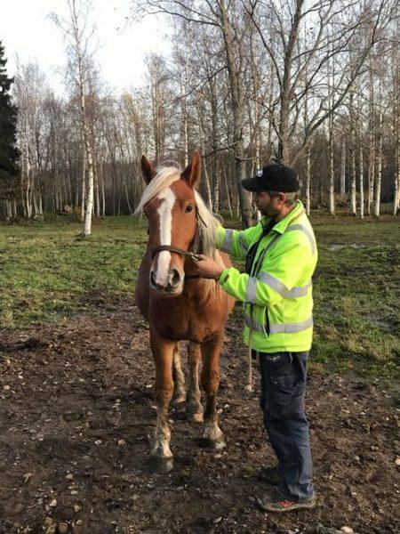 Man står med häst i hage