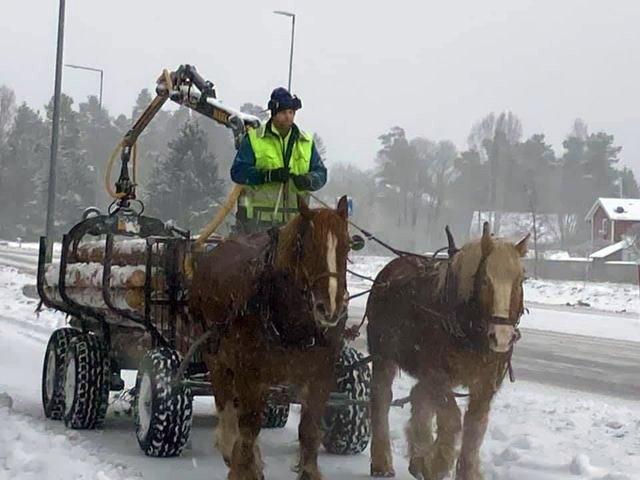 Två ardennrar drar griplastarvagn lastad med timmer. Kusken står upp iförd reflexväst. Tunn snötäcke på marken och snö i luften