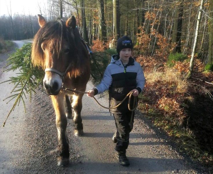 Pojke leder nordsvensk brukshäst längs grusväg, Bakom hästen syns delar av en gran