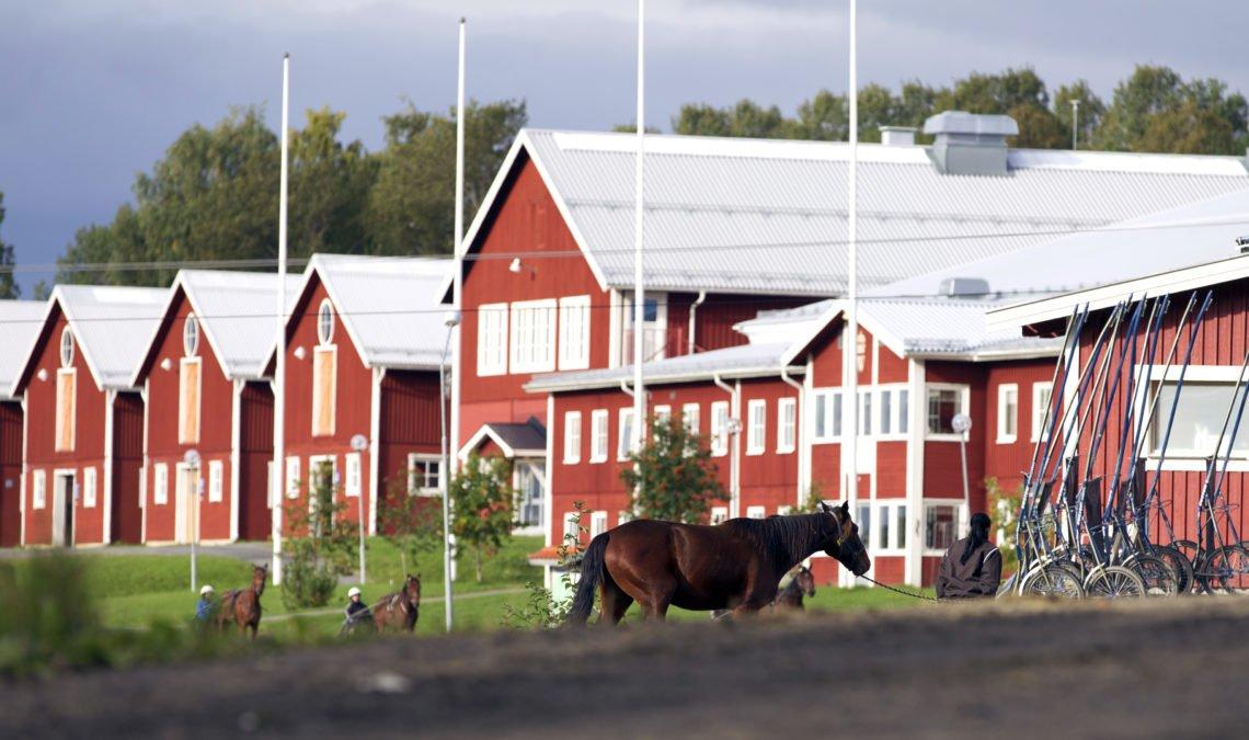Sommarbild som visar Wångens skolbyggnader och travhästar som leds eller körs förbi
