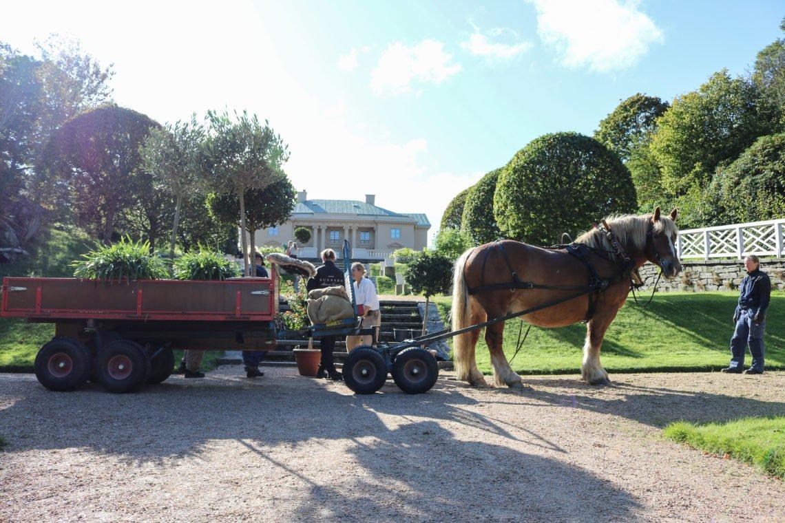 Brukshäst står stilla framför vagn medan tre personer håller på att lasta av växter. I bakgrunden syns en stentrapp, grusgång och ett slott i beige puts med grönt koppartak. bilden är tagen en sommardag