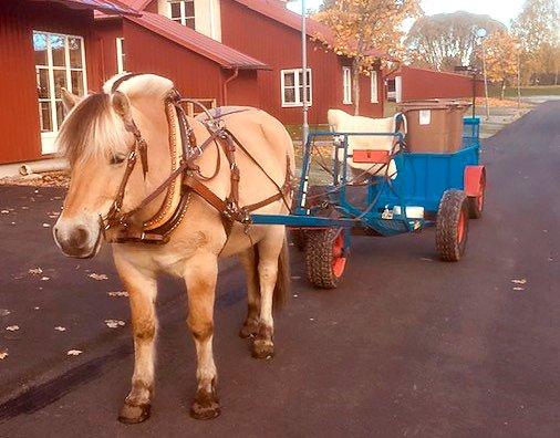 Häst står och väntar spänd framför en vagn på en asfaltsväg längs en gata med röda hus.