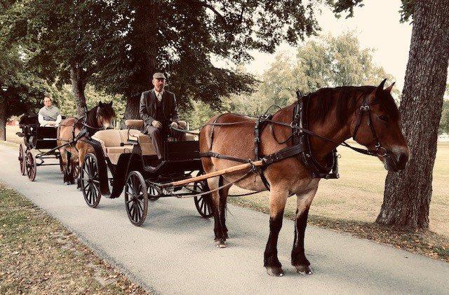 Två ekipage dras av nordsvenska hästar i rad längs en allé. Kusk klädd i tweedkostym och gubbkeps
