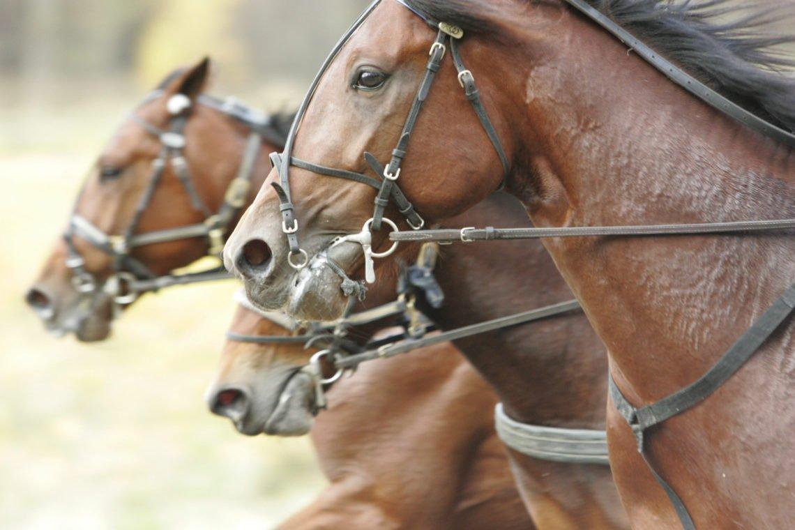 Tre hästfuvuden i bredd under träning