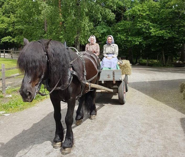 Svart nordsvensk spänd framför enkel vagn med två kvinnor som sitter på höbalar i vagnen. De är klädda som bondkvinnor med kjol och huckle.
