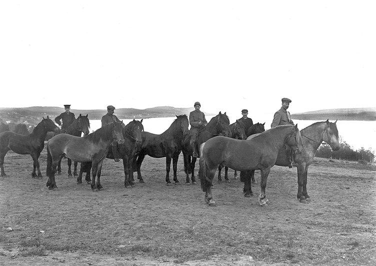 Svartvit bild visar en grupp med hästar och några män som rider på hästarna och har andra som handhästar. I bakgrunden syns Alsensjön